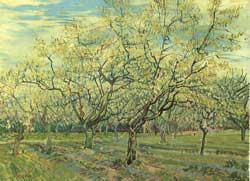 orchard-plum-trees